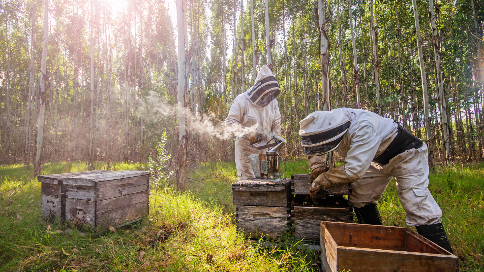 beekeeping-producers.jpg